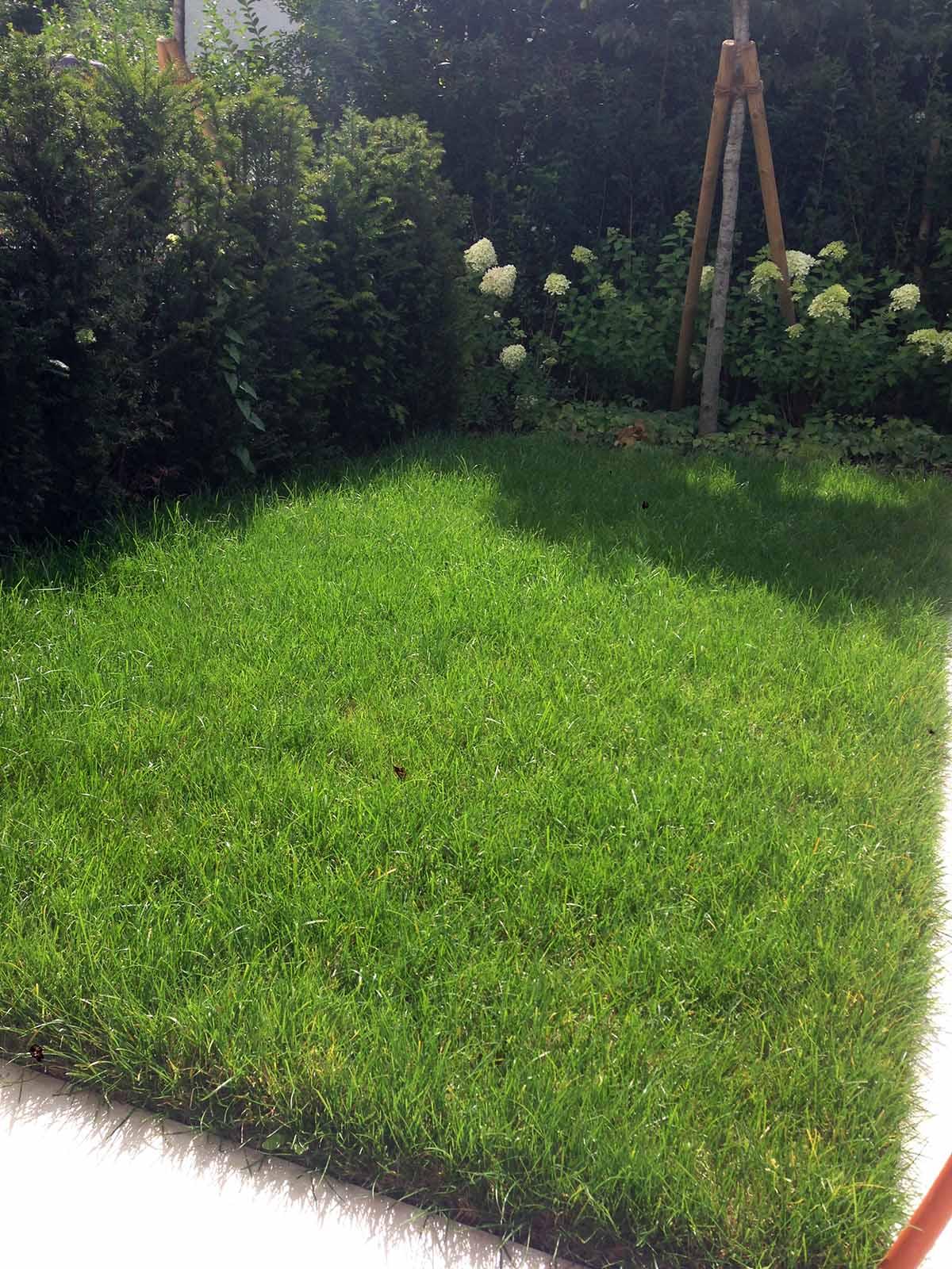 Privatgarten_Marais_Aussem_Gartenbau_planen_garten_IMG_2671
